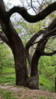 blad cypress trail