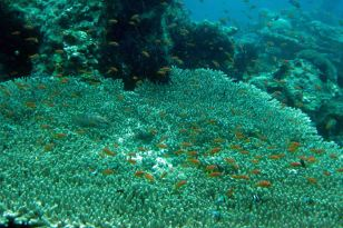 IMG_0290 table coral