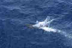 IMG_1496 dolphin