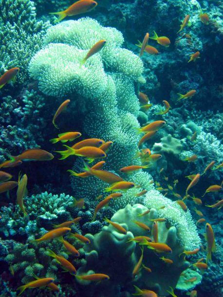 photo1430313762641 fish coral