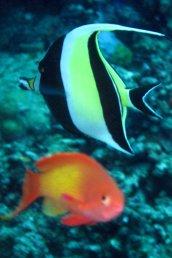 photo1430313766034 fish