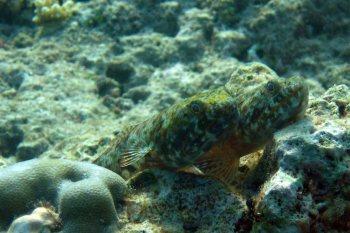photo1430314588082 lizardfish