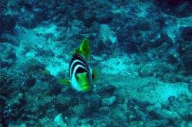 photo1430315298178 fish