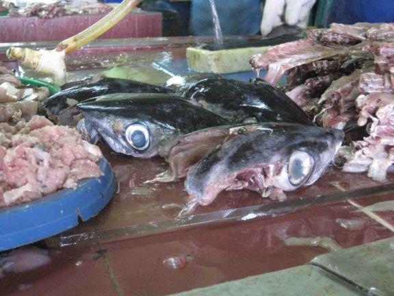photo1430316517943 fish