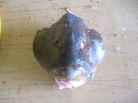 photo1430316518543 fishhead