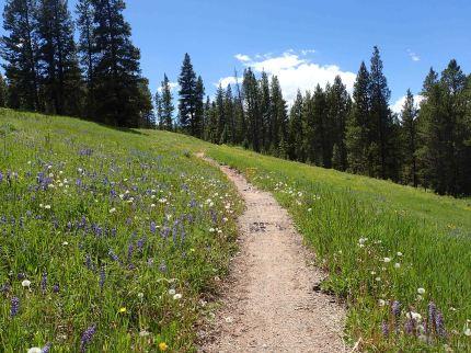 Segment 8 of the Colorado trail