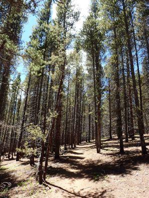 segment 9 of the Colorado Trail