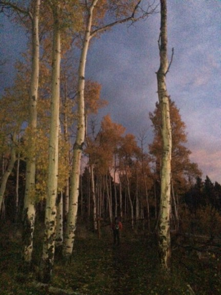 IMG_2611 at dawn