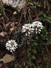 IMG_4498 flower