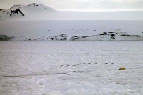 bear resting at ice hole with birds overhead