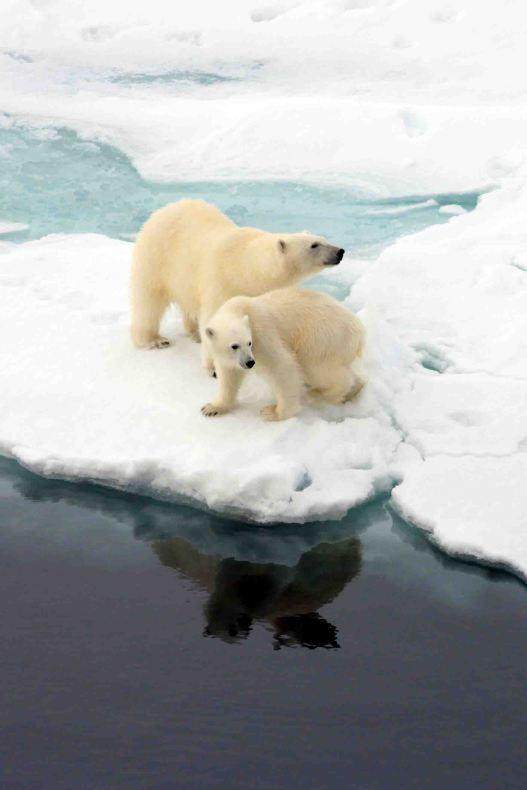 IMG_9135 polar bears adventuresofacouchsurfer
