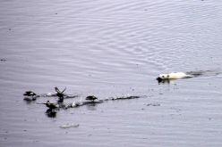 IMG_9245 polar bear adventuresofacouchsurfer