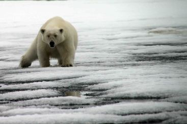 IMG_9492 polar bear adventuresofacouchsurfer