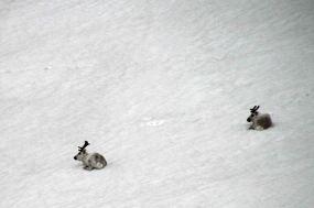 IMG_9569 reindeer adventuresofacouchsurfer
