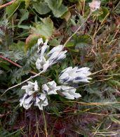 20160828_183359241_iOS flowers