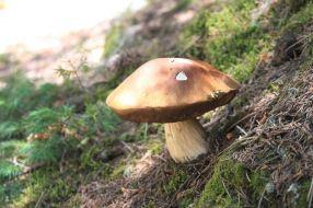 IMG_0505 mushroom