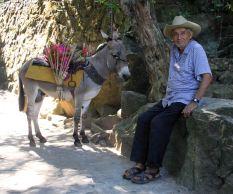 img_9727-donkey