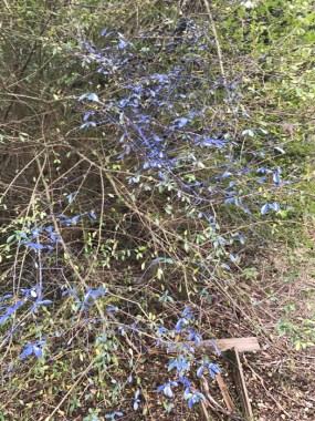 20170122_181747993_ios-blue-plant