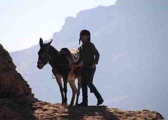 unruly donkey