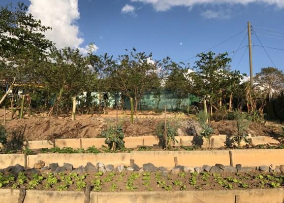 20170207_221327411_ios-organic-farm