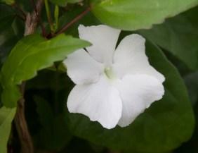 img_2096-flower