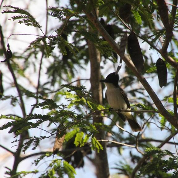 img_2300-bird