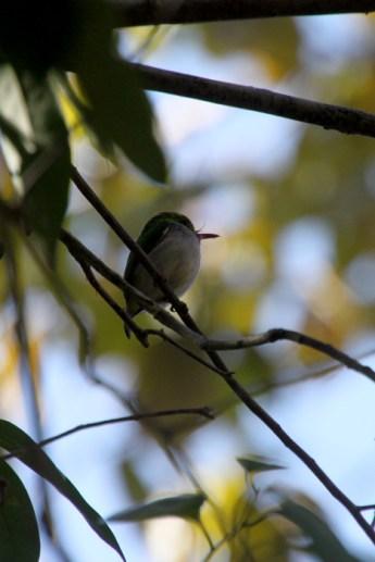 img_2339-bird