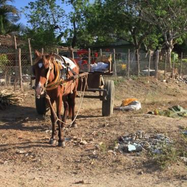 img_2347-horse