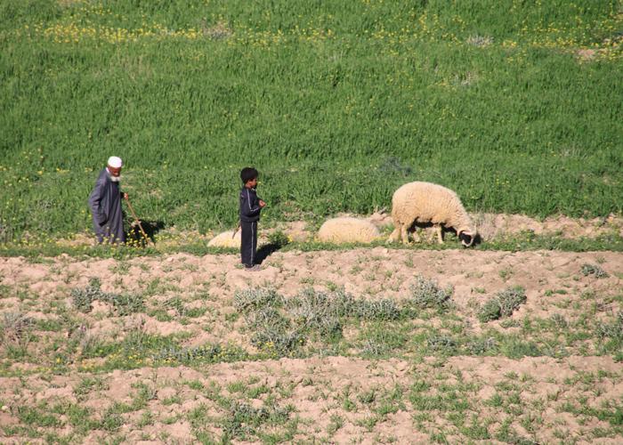 IMG_2939-pasture