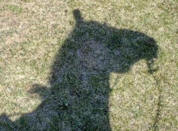 Mojo's shadow