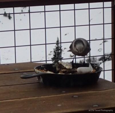our dessert...bird's breakfast