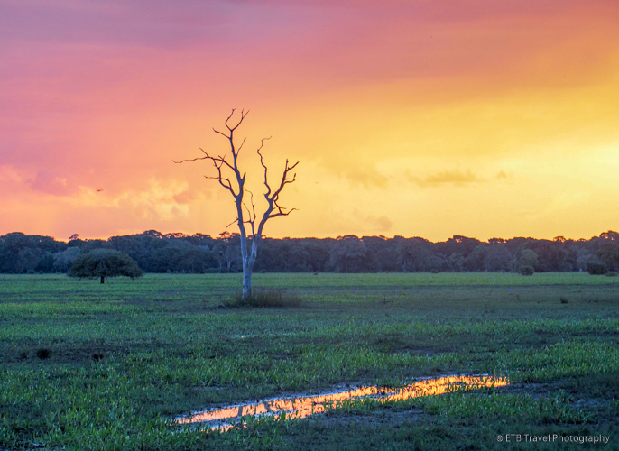 sunset in the pantanal brazil