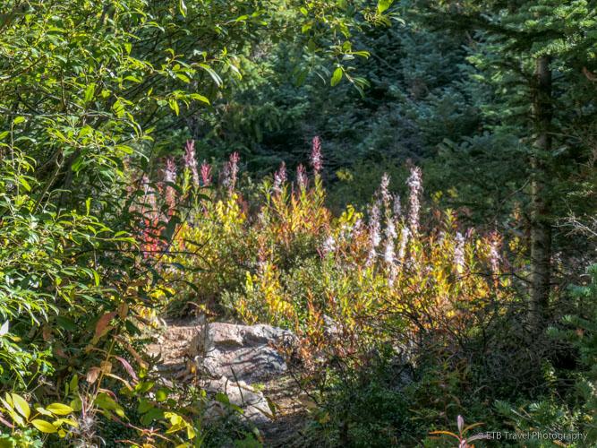 Bighorn Creek Trail
