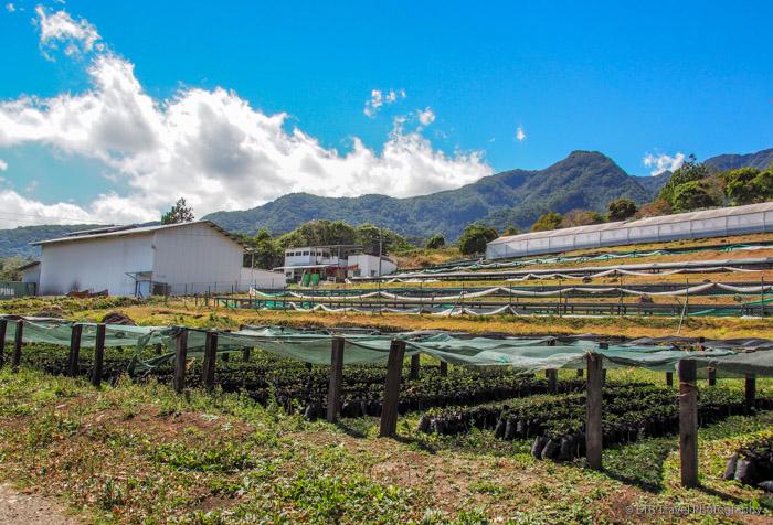 Don Pepe Coffee Plantation