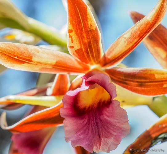 orchid on three waterfalls trail