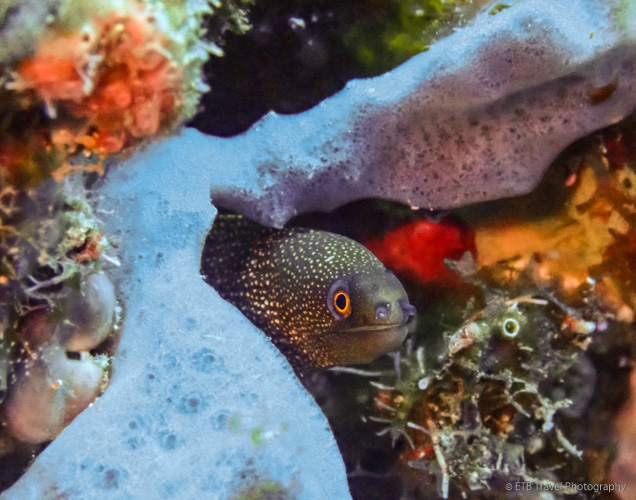 eel in Saba
