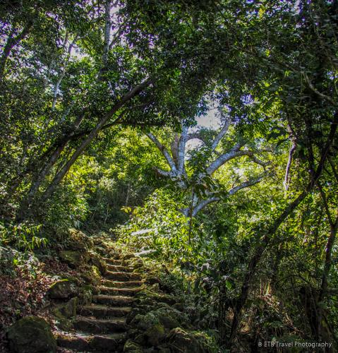 Hiking in Saba: Maskerhorne Trail