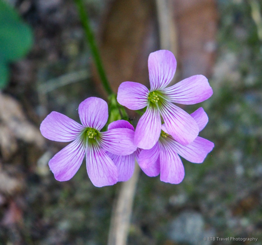 flowers on Maskerhorne Trail in Saba