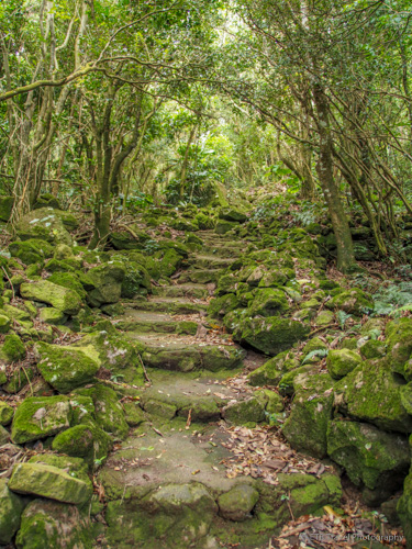 Mt. Scenery Trail in Saba