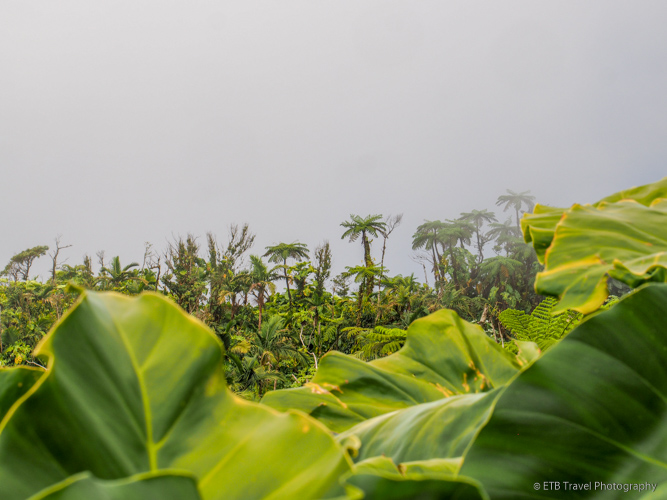 cloud forest in saba