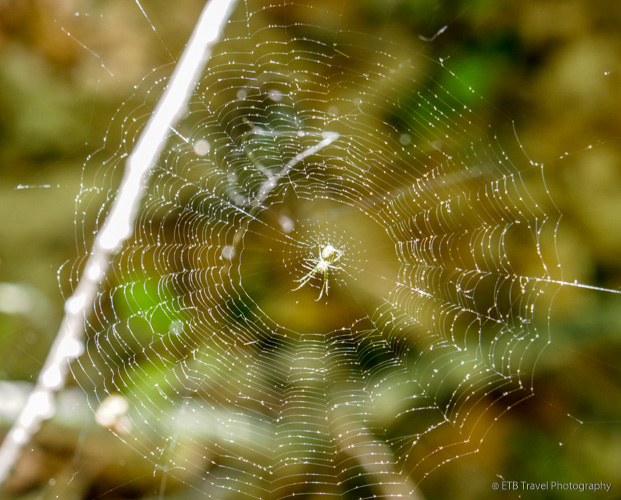 spider and its web