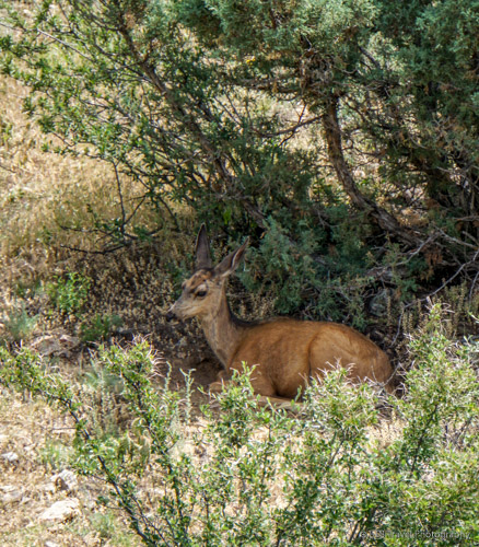 deer at lory state park