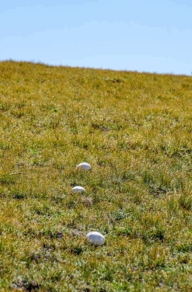 mushrooms on the way to bison peak