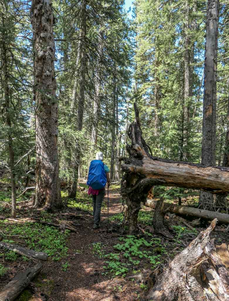 Tina by a fallen tree on the Sneffels Traverse