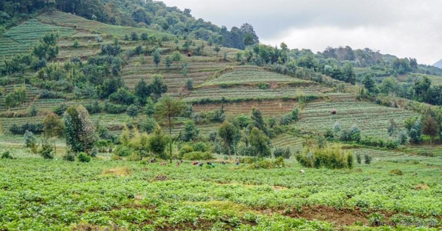 farmland in Rwanda
