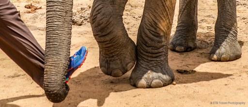 elephant and my shoe