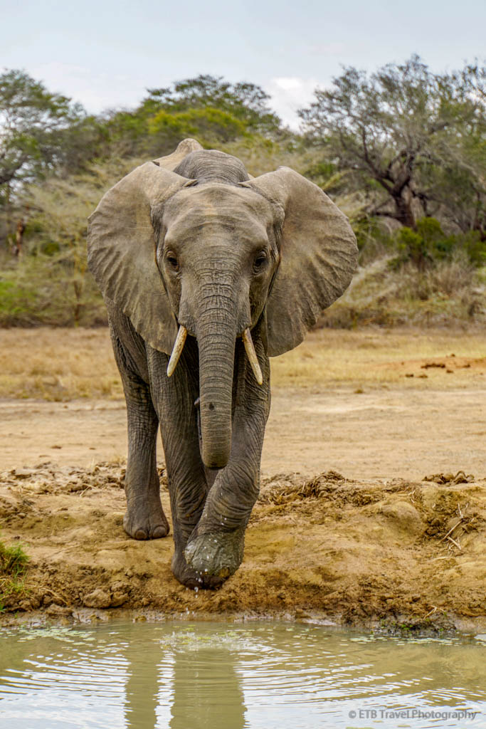 elephant at Umani Springs