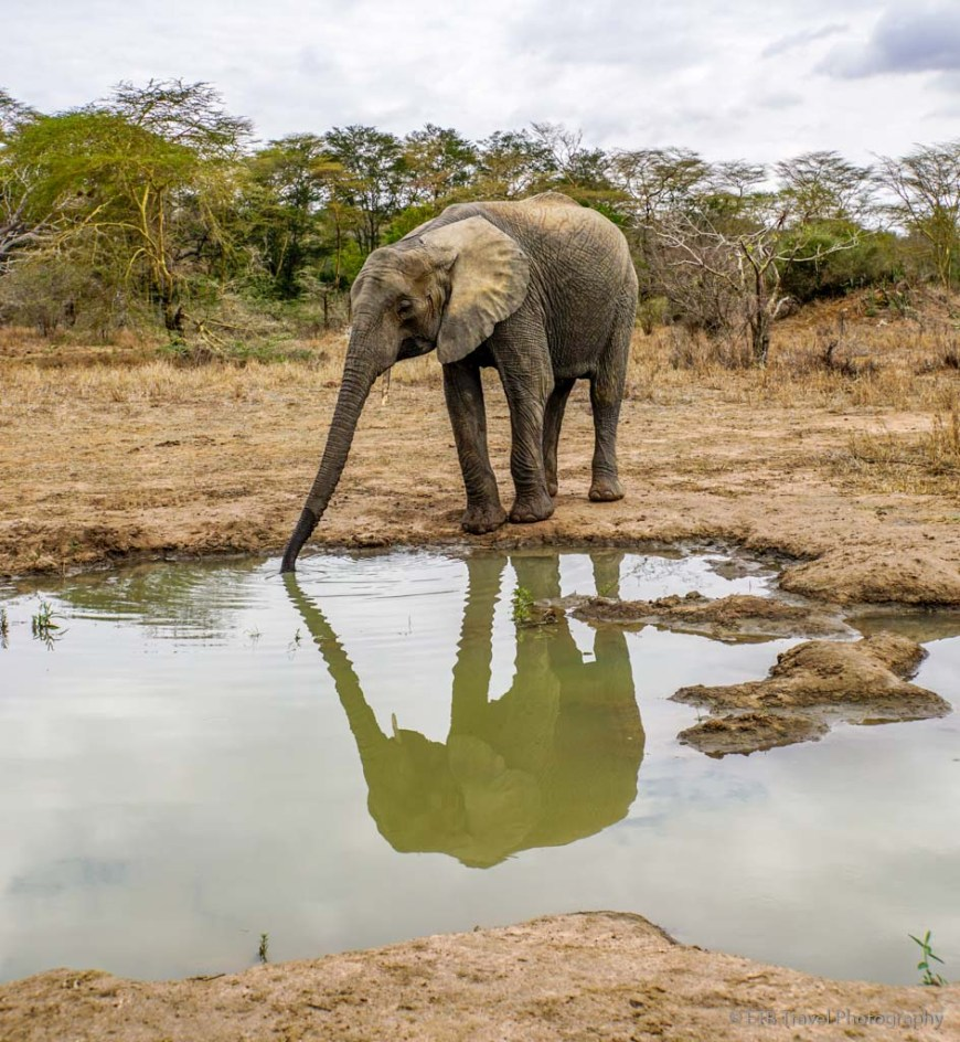 reflection of elephant at Umani Springs