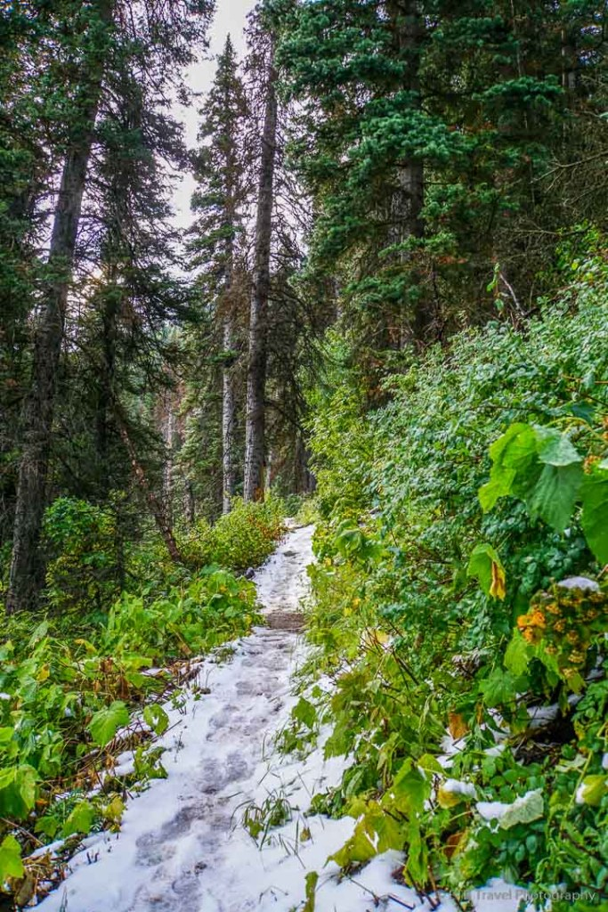 Lambs Canyon Pass Trail