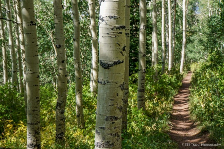 Mill D Fork Trail